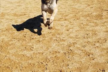 Pet Friendly Lawler Ranch Dog Park