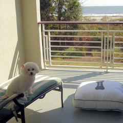 Dog at the pet friendly Westin Hilton Head Island Beach Resort