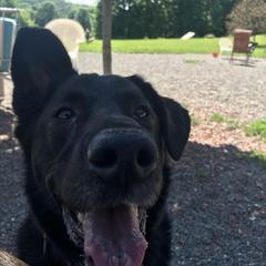 Summer at the dog park!