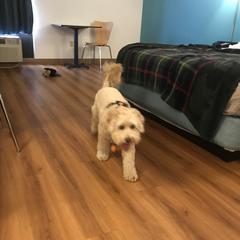 Ginger At Motel 6