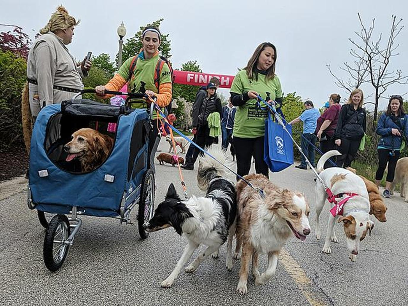 Bark in the Park is a dog-friendly event that raises funds for Anti-Cruelty Society.