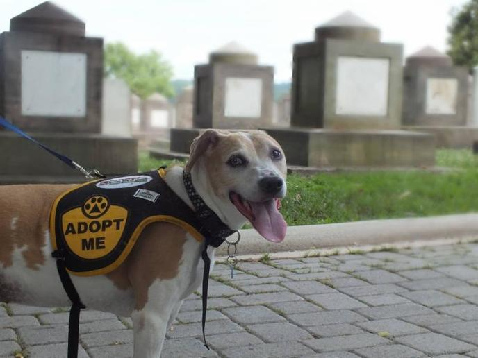 Day of the Dog is a unique pet-friendly festival in the nation's capital.