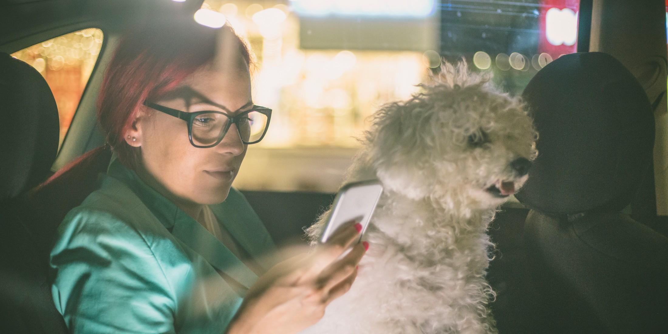 Pet Taxis & Rideshares: Beyond Lyft & Uber's Pet Policy