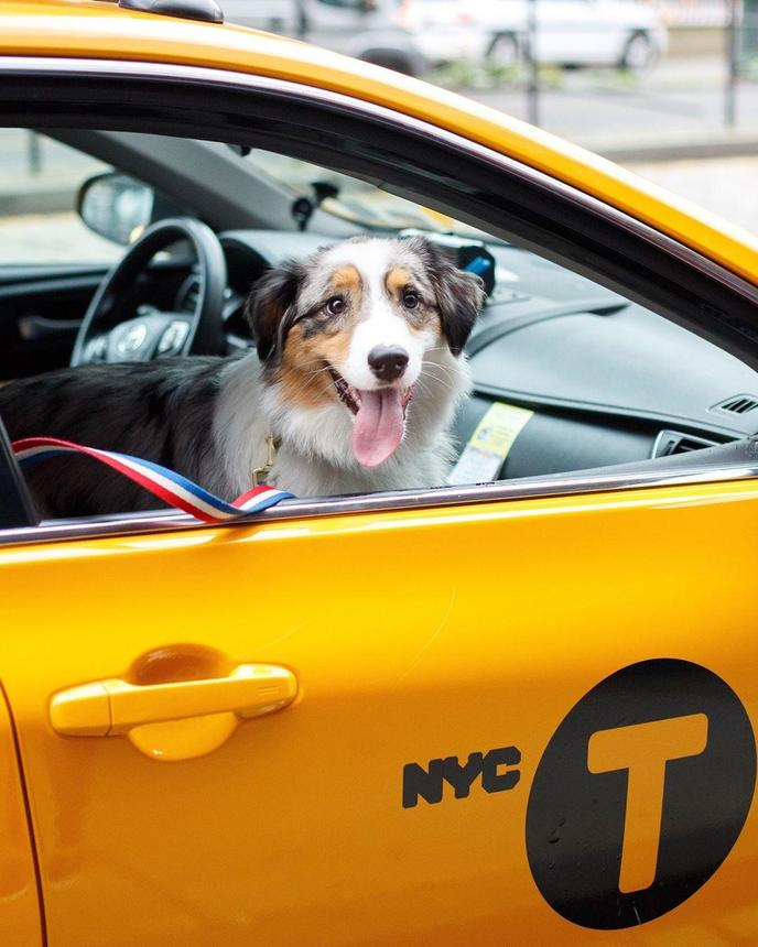 Pet taxis and pet-friendly taxis help Fido get around town.