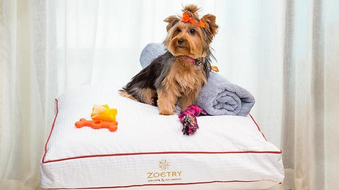 Zoetry Montego Bay is the only dog-friendly all-inclusive resort in Jamaica.