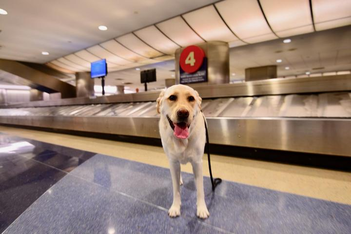 The 10 Most Pet-Friendly Airports in the U.S.