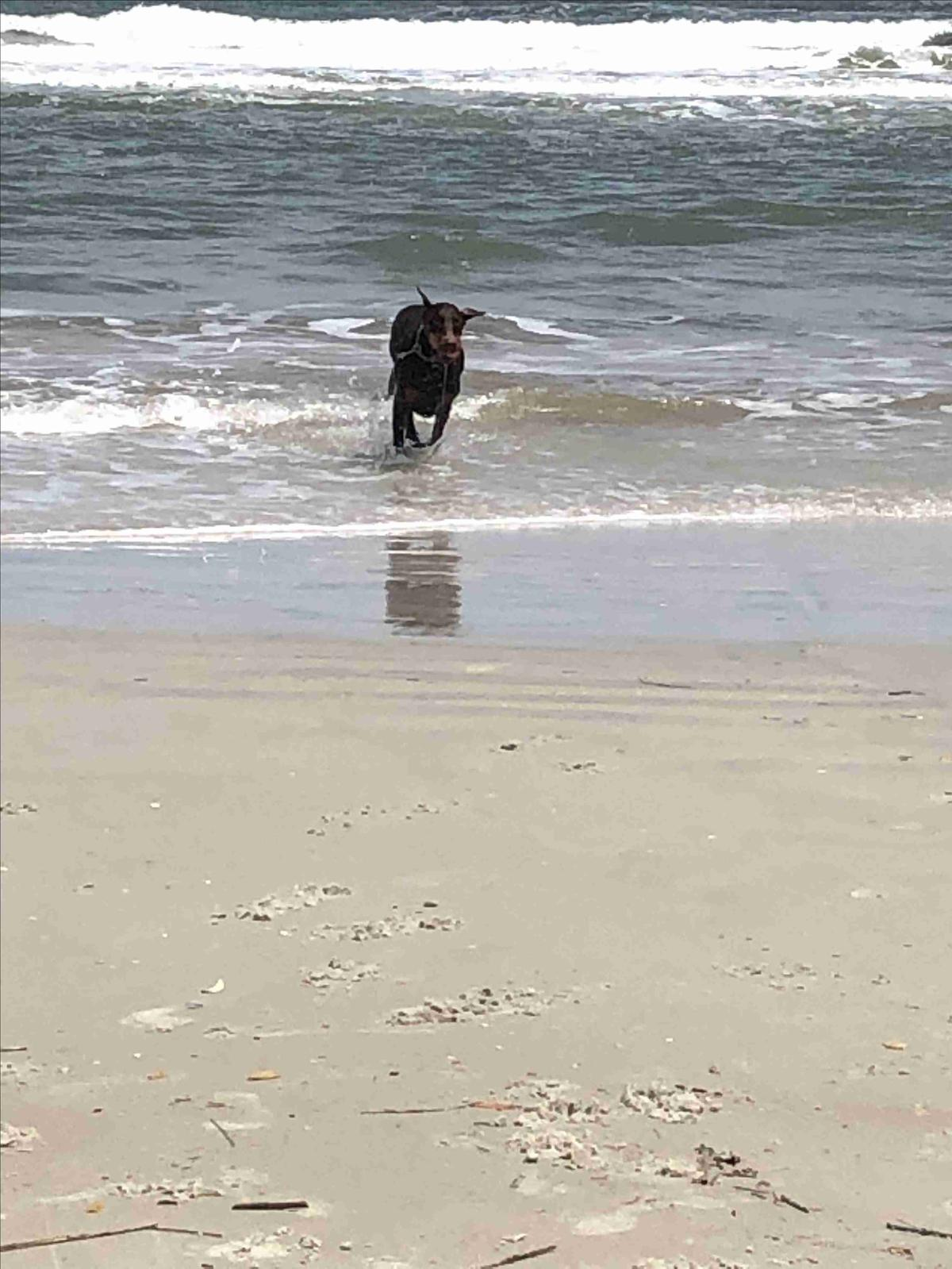 Max On The Beach