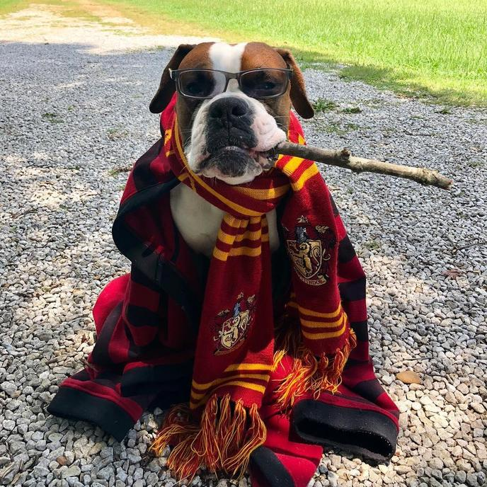 Welcome to Pawgwarts is a dog event for Fido's inner wizard.