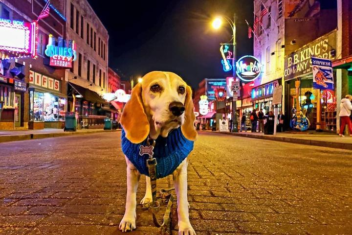 BringFido's Ruff Guide to Tennessee