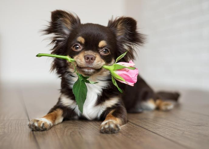 These flowers are perfect for dog moms on Mother's Day.