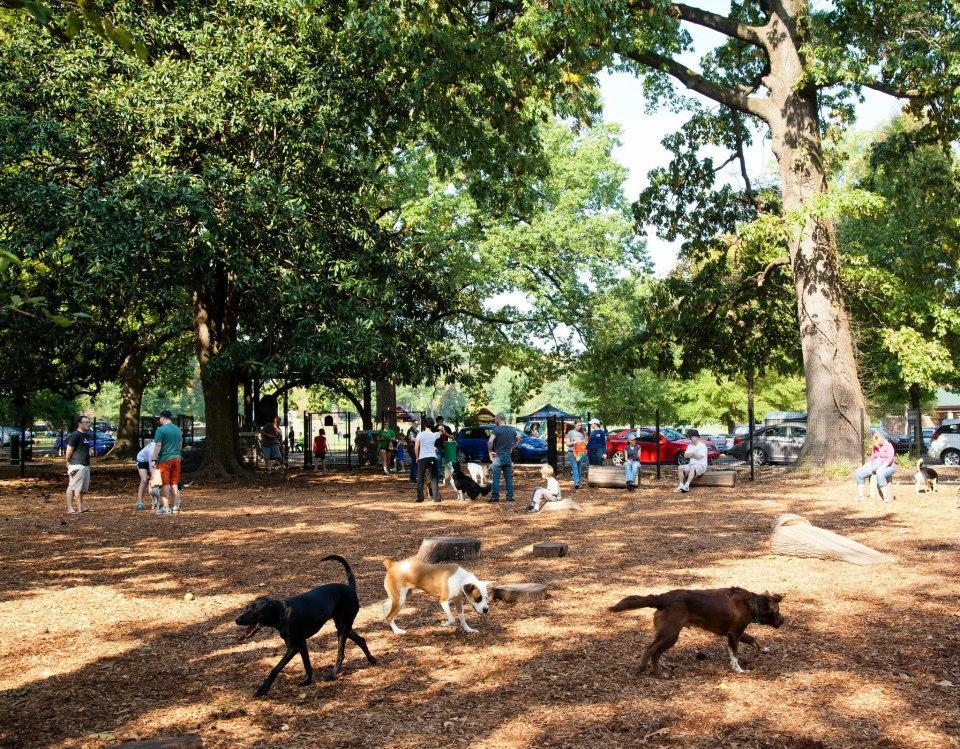 Dogs let loose at Overton Bark