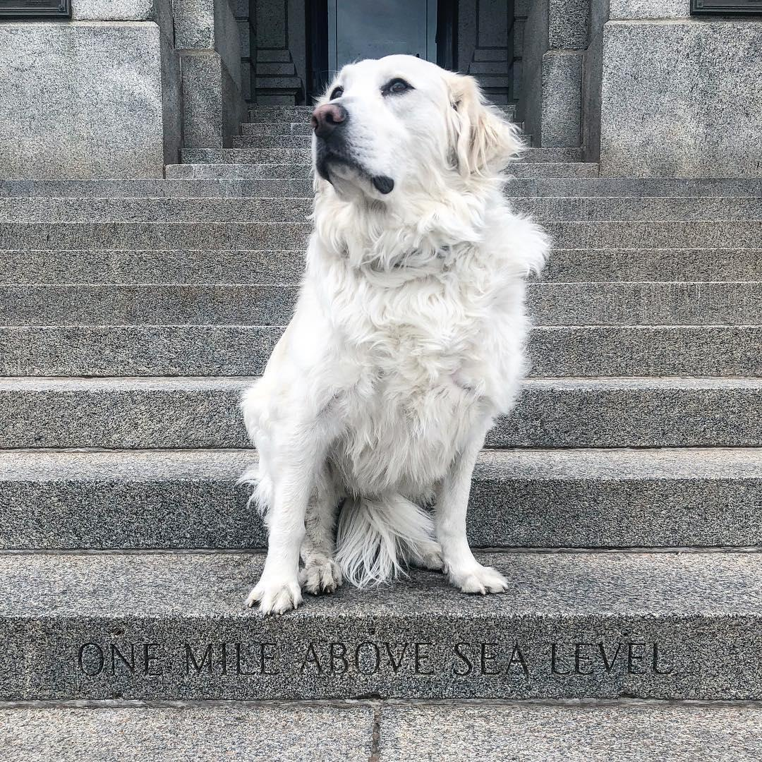 Visit the Mile High Marker at the Colorado State Capitol with your dog.