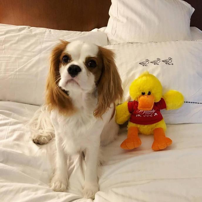 The Peabody Memphis is one of Memphis' most elegant pet-friendly hotels.