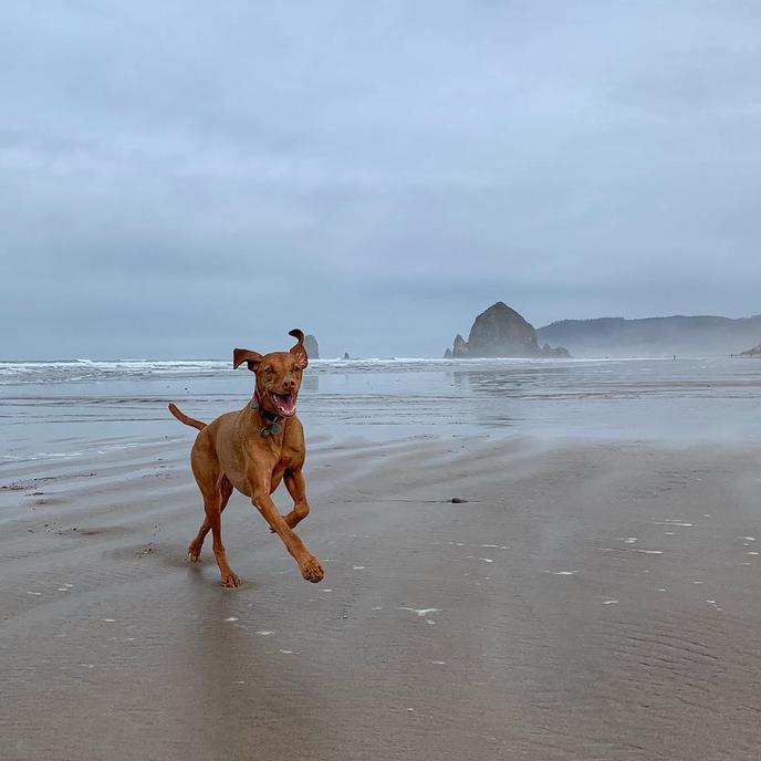 This dog beach is located near Ecola State Park in Oregon.