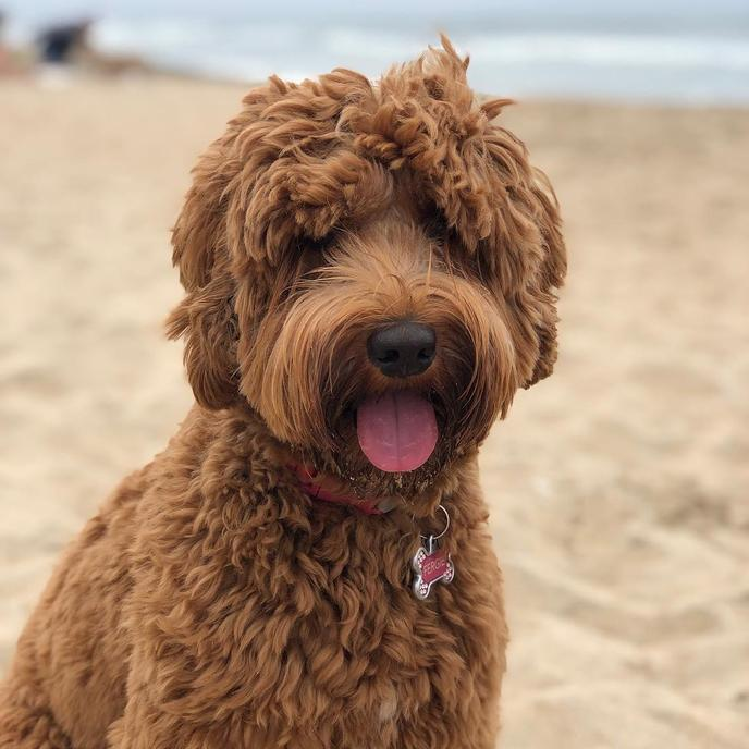 Huntington Dog Beach has long been a beloved dog beach in California.