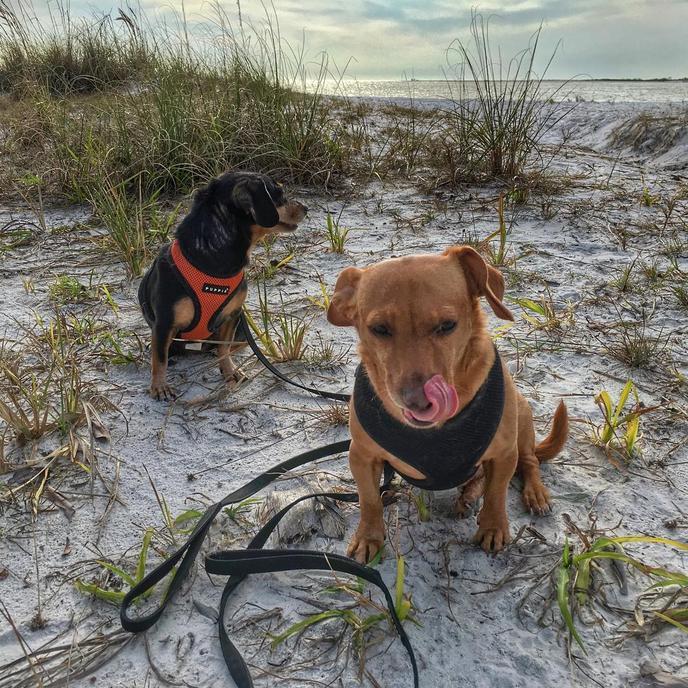 Dog Beach is, of course, a dog-friendly beach!