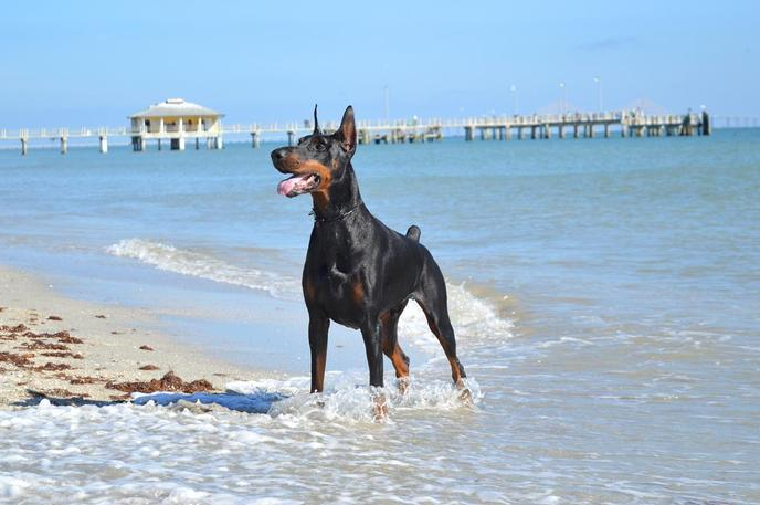 Fort de Soto is a dog-friendly beach with plenty of history.