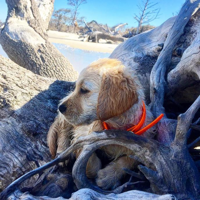 Jekyll Island has several dog-friendly beaches for Fido to explore.