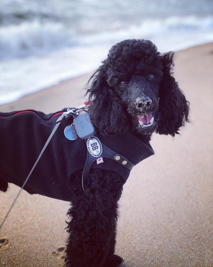 The Hamptons have numerous pet-friendly beaches.