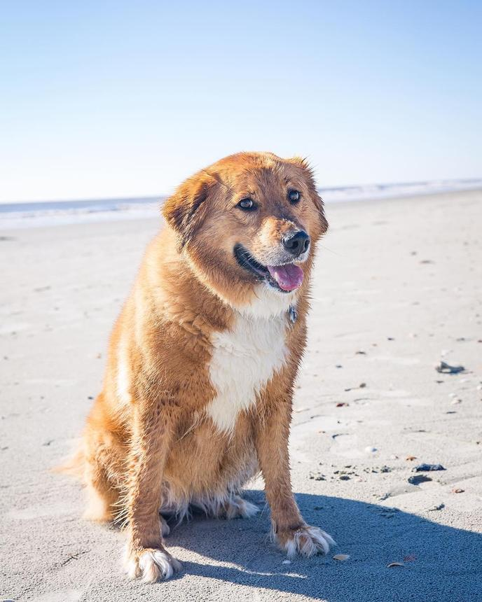 Morris Island is a dog-friendly beach that's light years from Myrtle Beach.