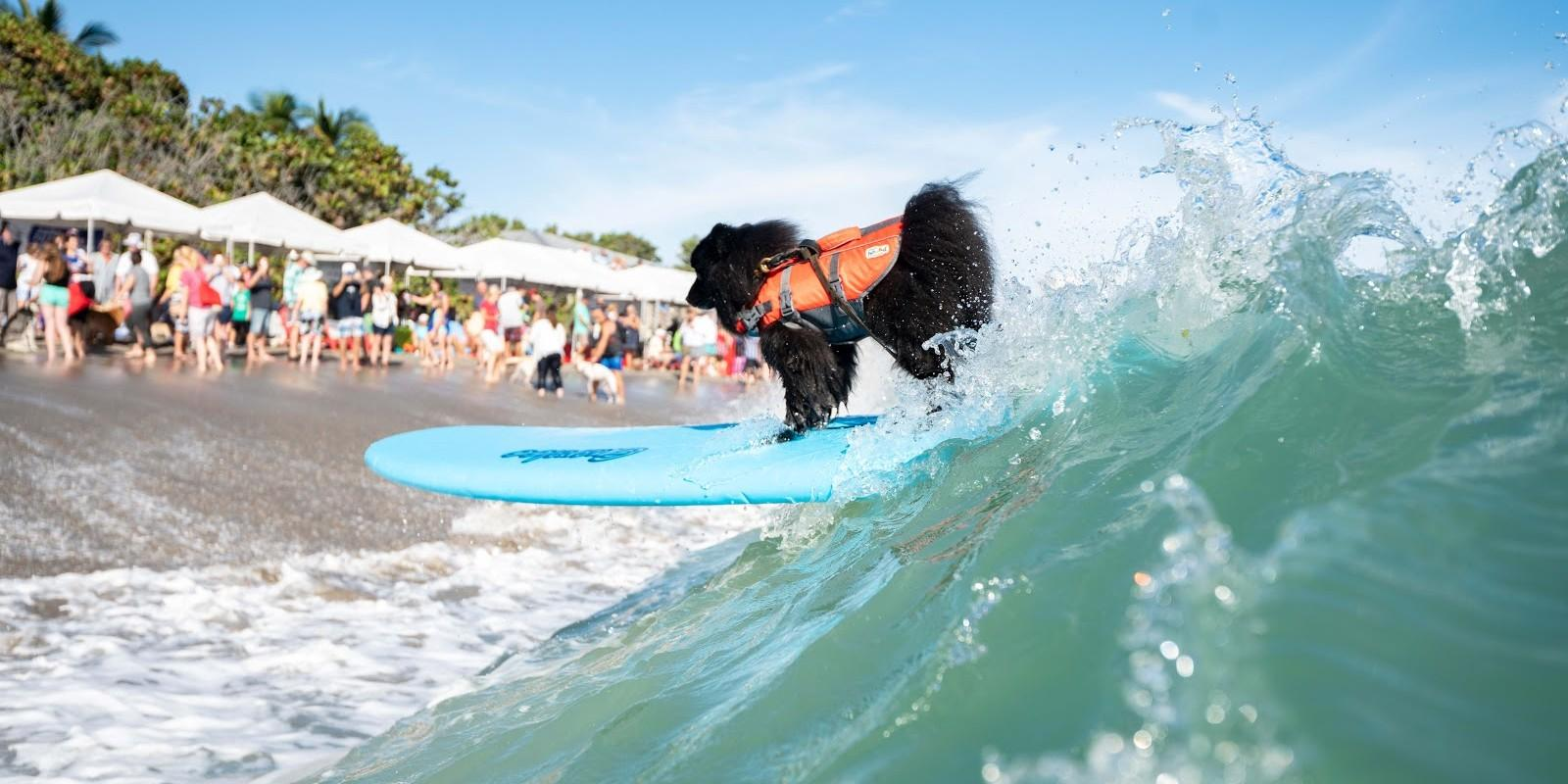 Check out our top 10 dog beaches on the east coast!