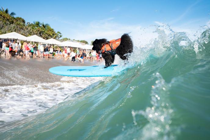Jupiter Beach is one of Florida's most dog-friendly beaches.