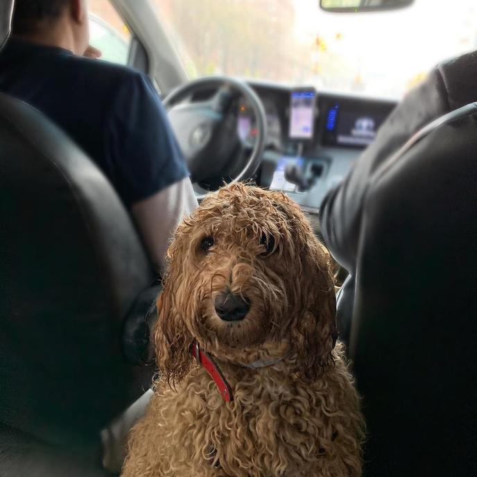 Pet-friendly Ubers make it easy to get around with your dog.