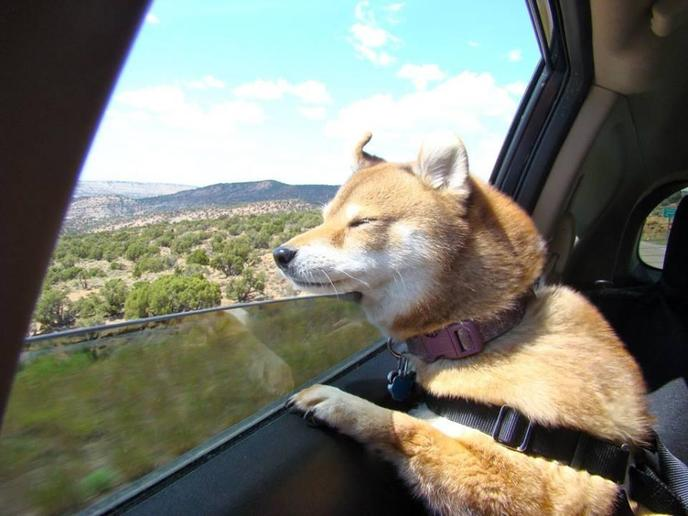 Pet Pro is a pet taxi service that operates in all 50 states.