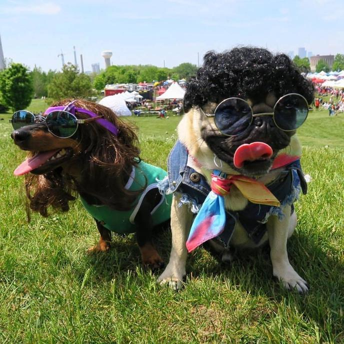 Woofstock Toronto is the largest dog-friendly festival in North America.