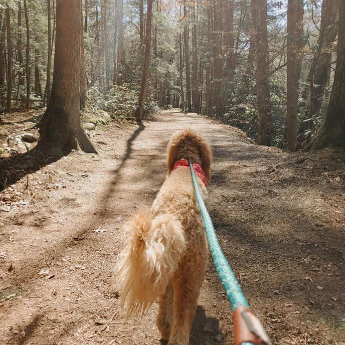A pet-friendly hike in Great Smoky Mountains National Park.