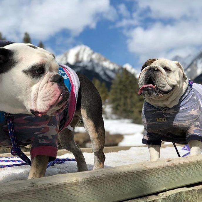 How pet friendly is Rocky Mountain National Park? Find out here.