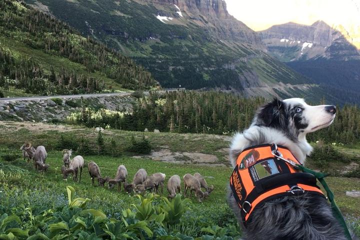 How pet-friendly is Glacier National Park? Find out here.