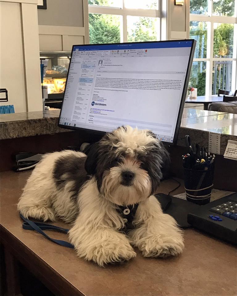 Dog on hotel desk
