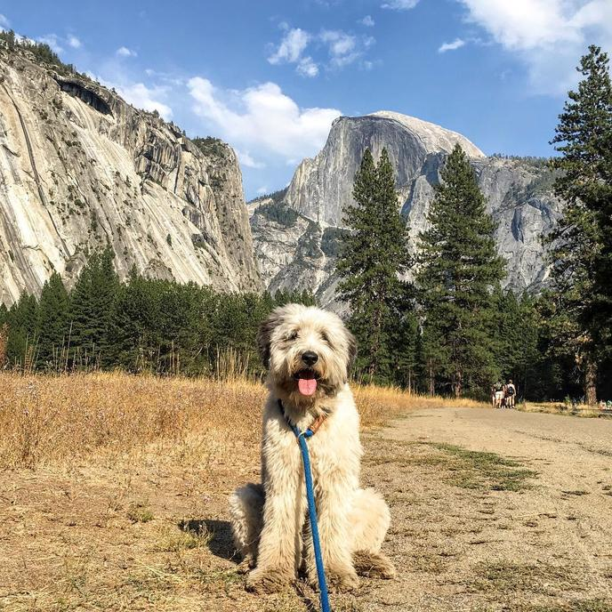 Yosemite is a pet-friendly national park.