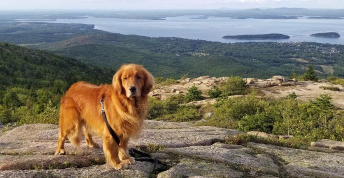 Acadia is our most pet-friendly national park!