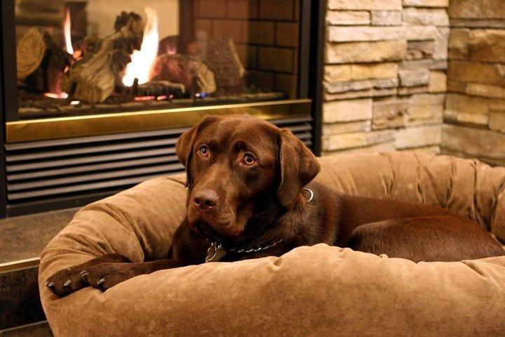 Dog on couch by fire