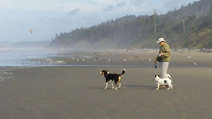 Olympic National Park has a pet-friendly beach.