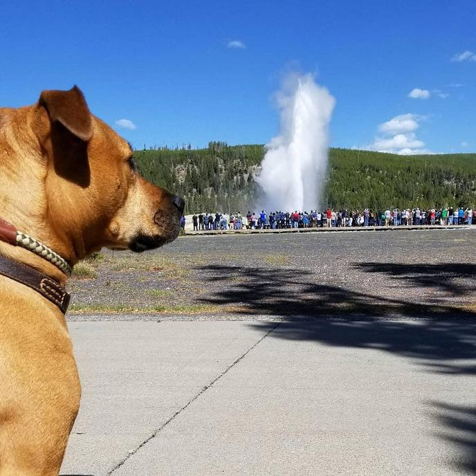 Yellowstone is a pet-friendly park.