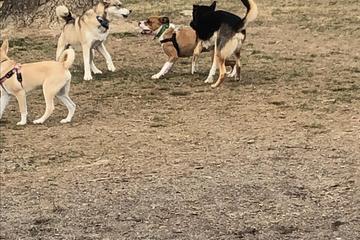Pet Friendly Warwick Town Park Dog Park