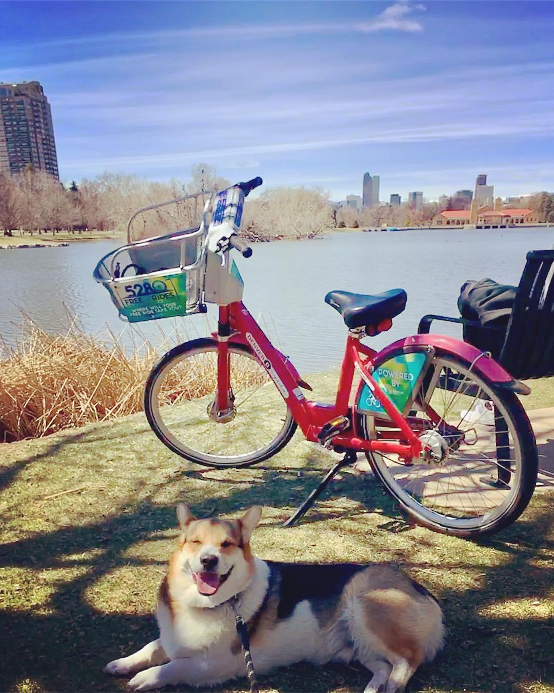 Explore Denver's City Park with your dog.