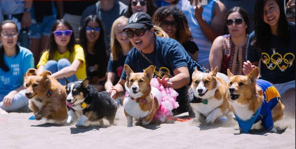 Corgi Con is one of the cutest dog-friendly events in June.