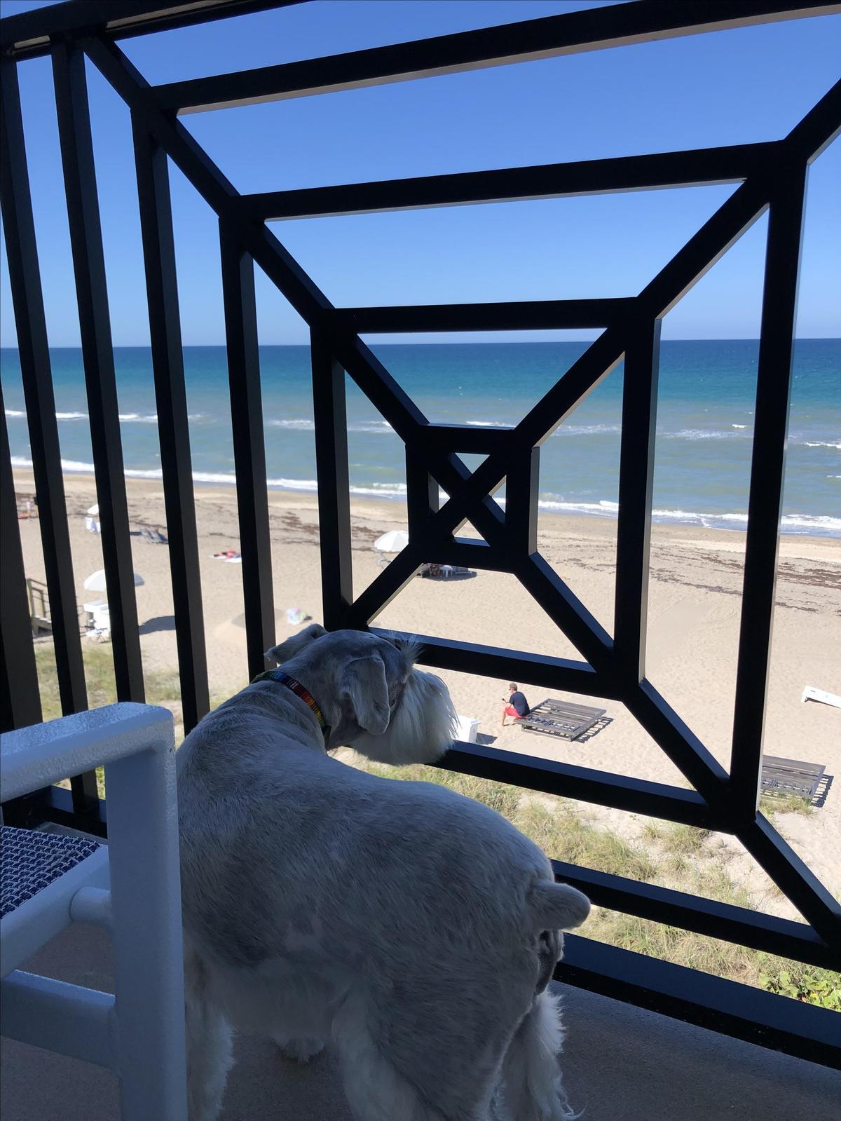 Oceanfront king view