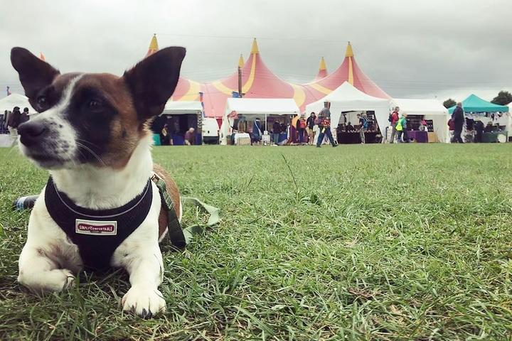 Bring Fido to the pet-friendly Shrewsbury Folk Festival.