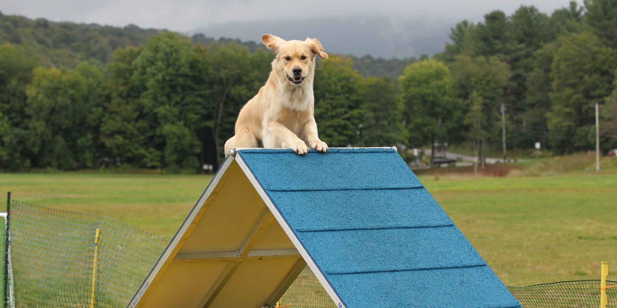Bring Fido to a pet-friendly summer camp.
