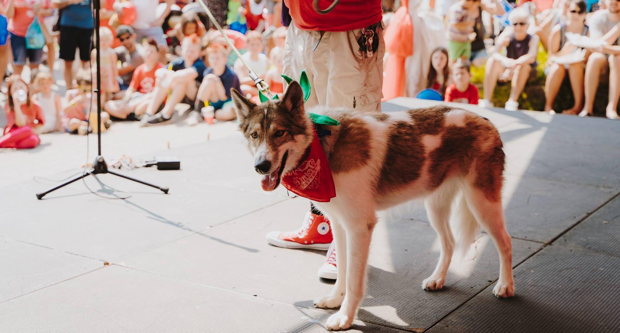 Bring Fido to these pet-friendly summer festivals.