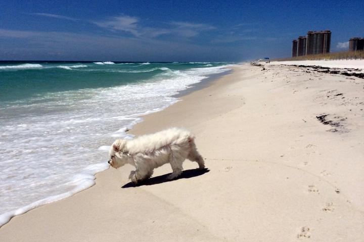Safety tips for a dog-friendly beach vacation.
