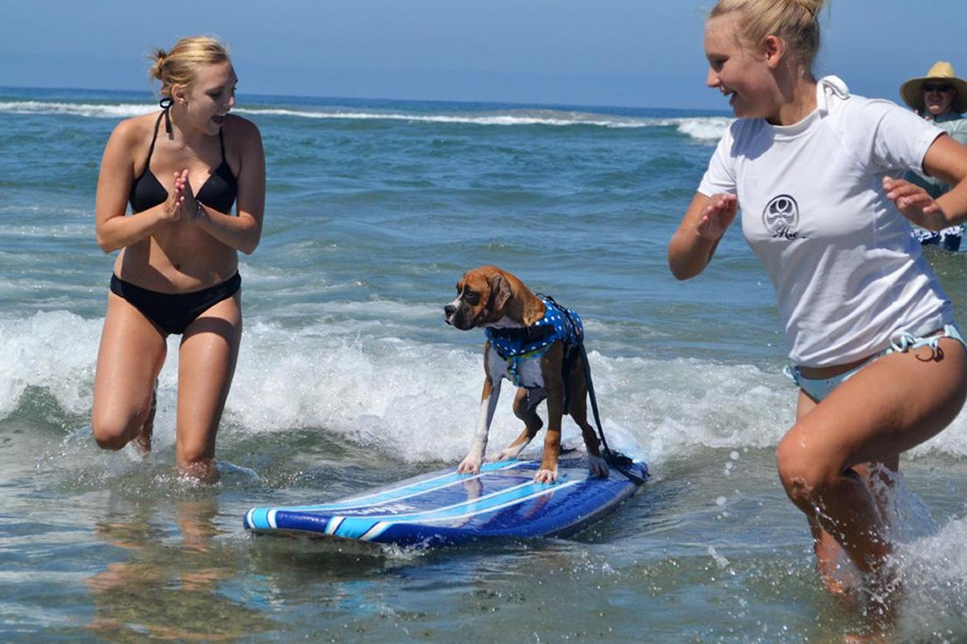 Teach your pup to dog surf at the famous Dog Beach.