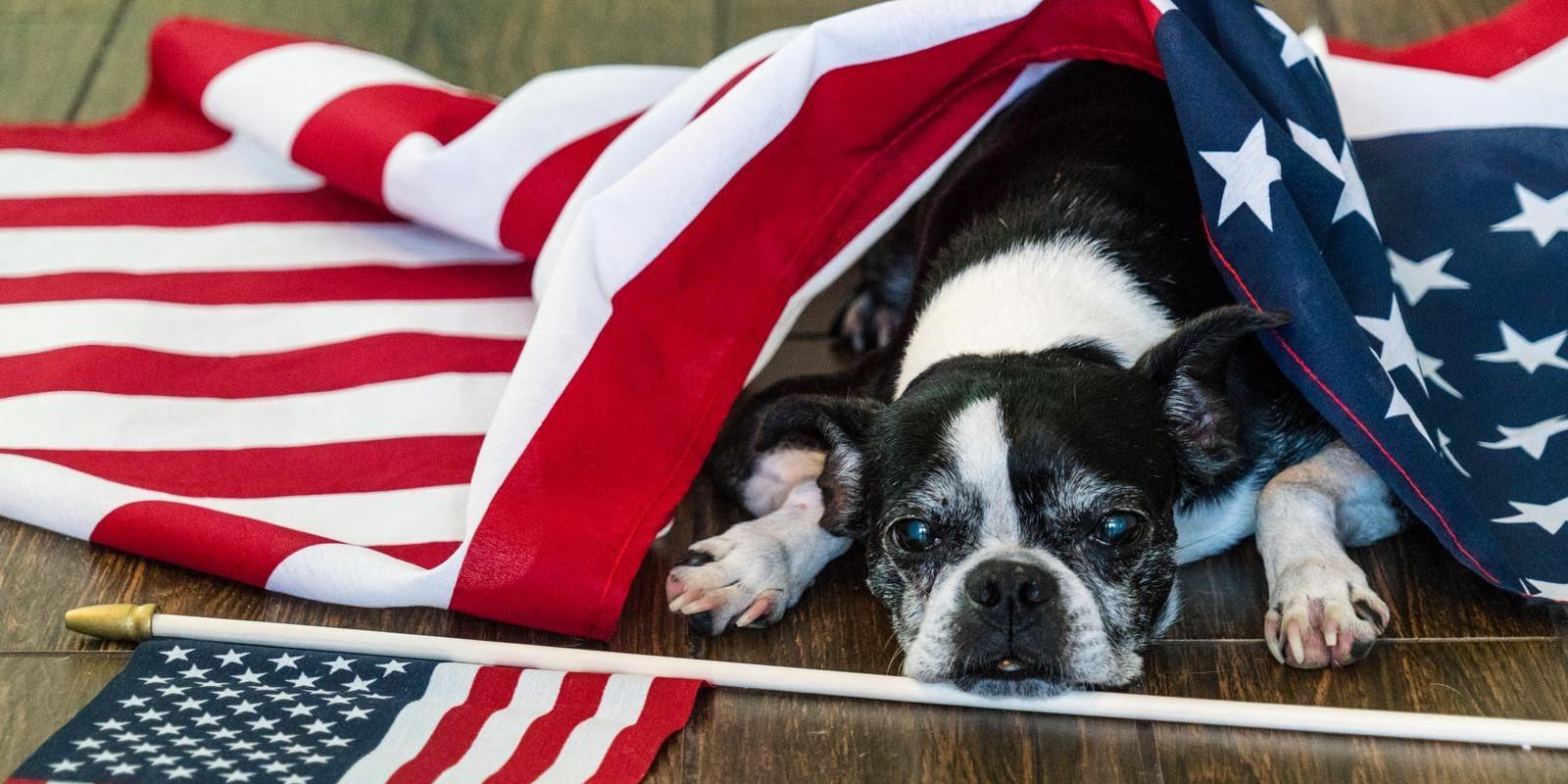 Pet Safety Tips for July 4th.
