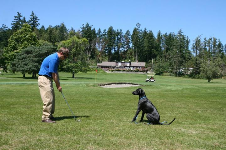 Golfing with your dog