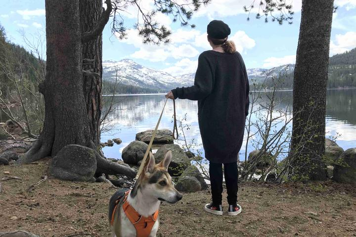 Pet Friendly Donner Memorial State Park